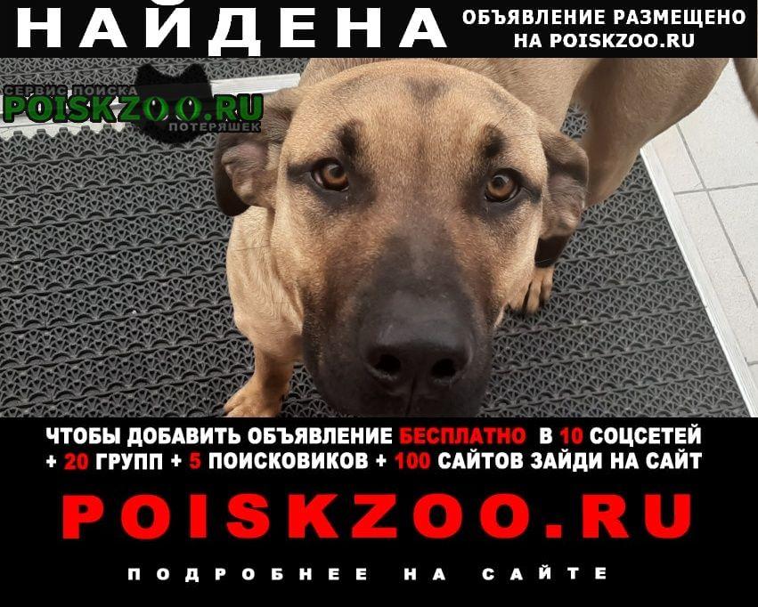 Найдена собака молодой пёс Пенза