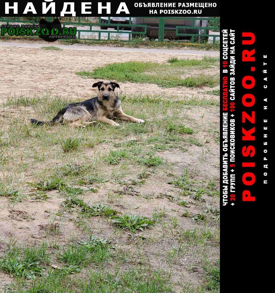 Найдена собака Нижний Новгород