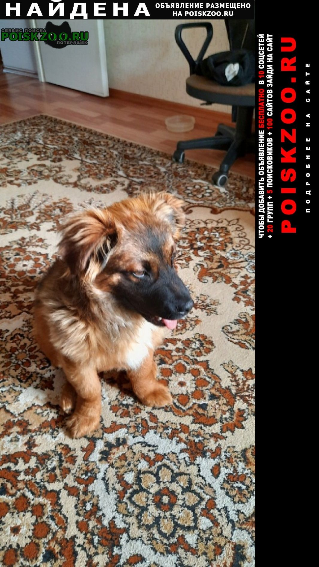 Найдена собака кобель Гомель