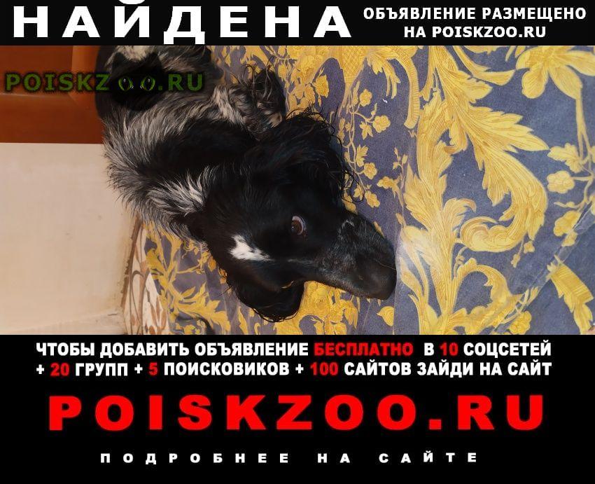 Найдена собака кобель Таганрог