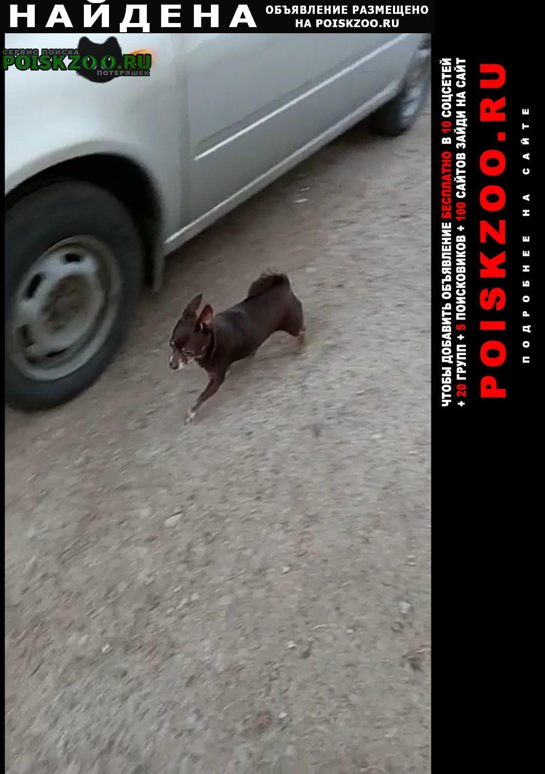 Найдена собака маленькая собачка шоколадного цв Уфа