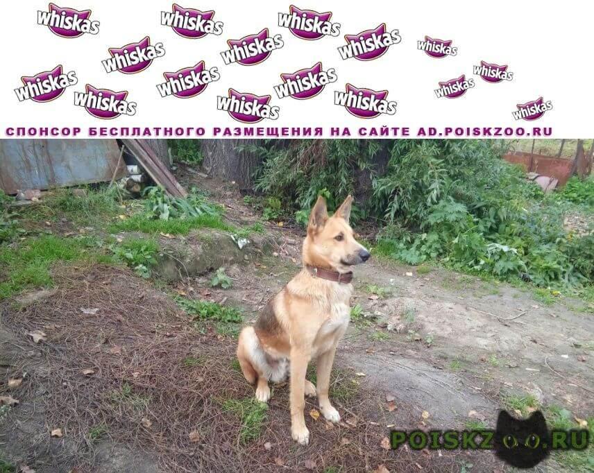 Найдена собака кобель в ошейнике г.Новосибирск