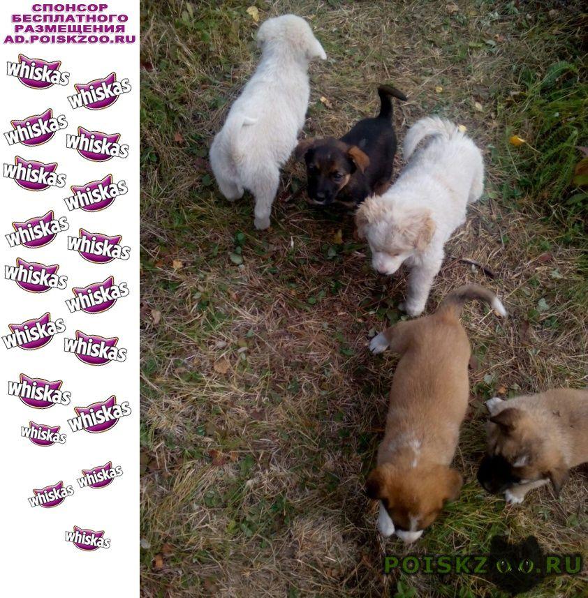 Найдена собака щенки ищут хозяина г.Семилуки