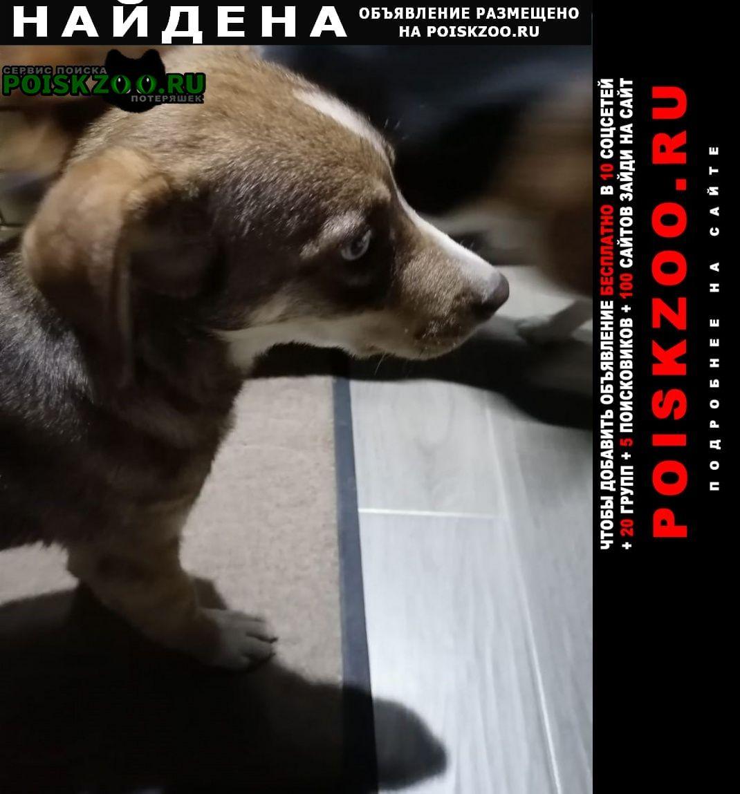 Найдена собака может кто-то ищет  г.Анапа
