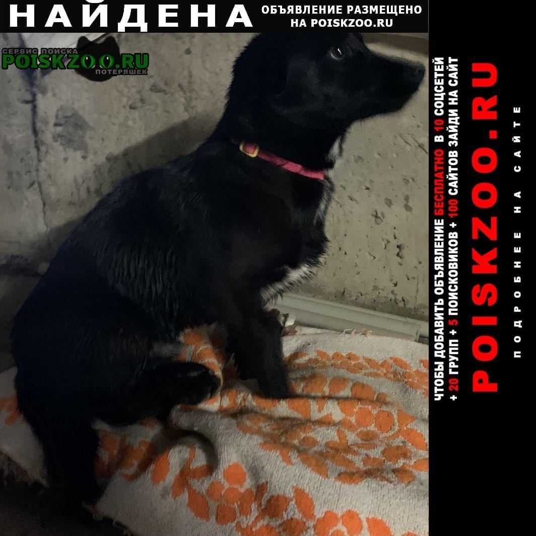 Найдена собака кобель мальчик в красном ошейнике Краснодар