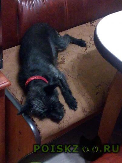 Найдена собака г.Ставрополь