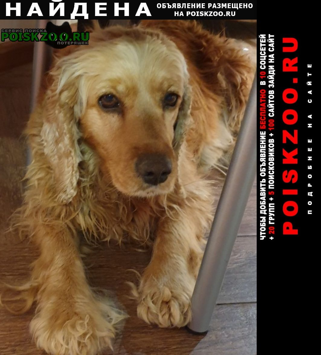 Найдена собака Кропоткин