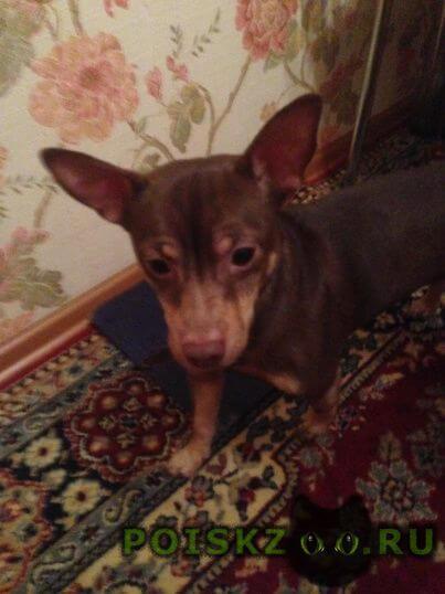 Найдена собака кобель северо-запад г.Челябинск