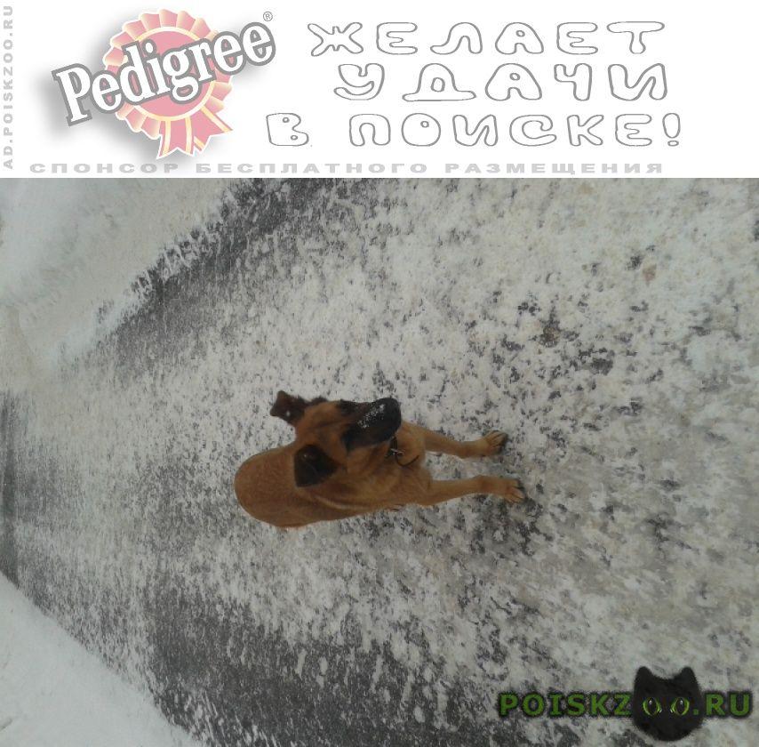 Найдена собака видела собаку (ул.хохрякова) с ошейником г.Пермь