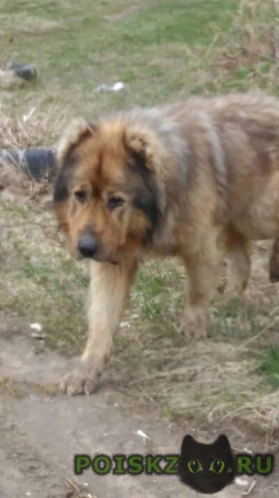 Найдена собака г.Тверь