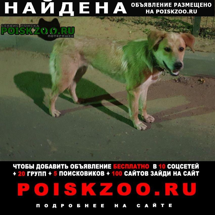 Москва Найдена собака кобель