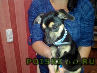 Найдена собака г.Волгодонск
