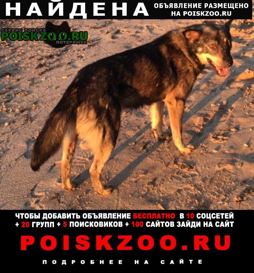 Пучеж Найдена собака кобель