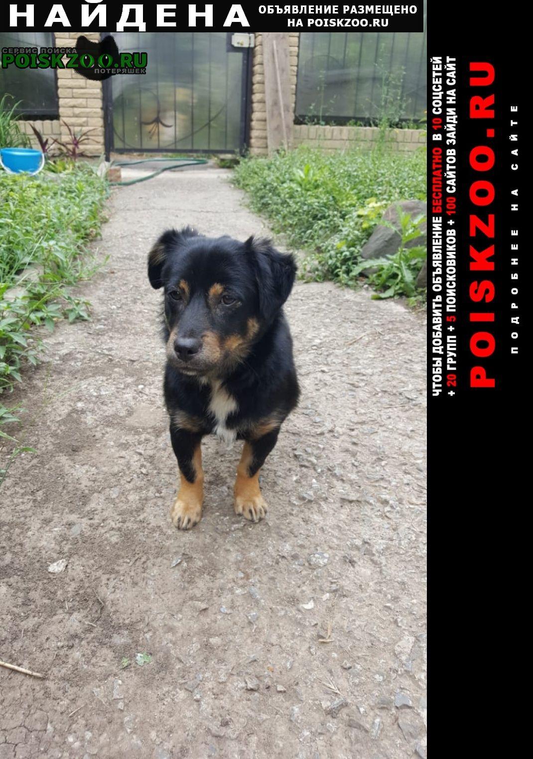 Найдена собака замечательная молоденькая девочка хозяев Ростов-на-Дону