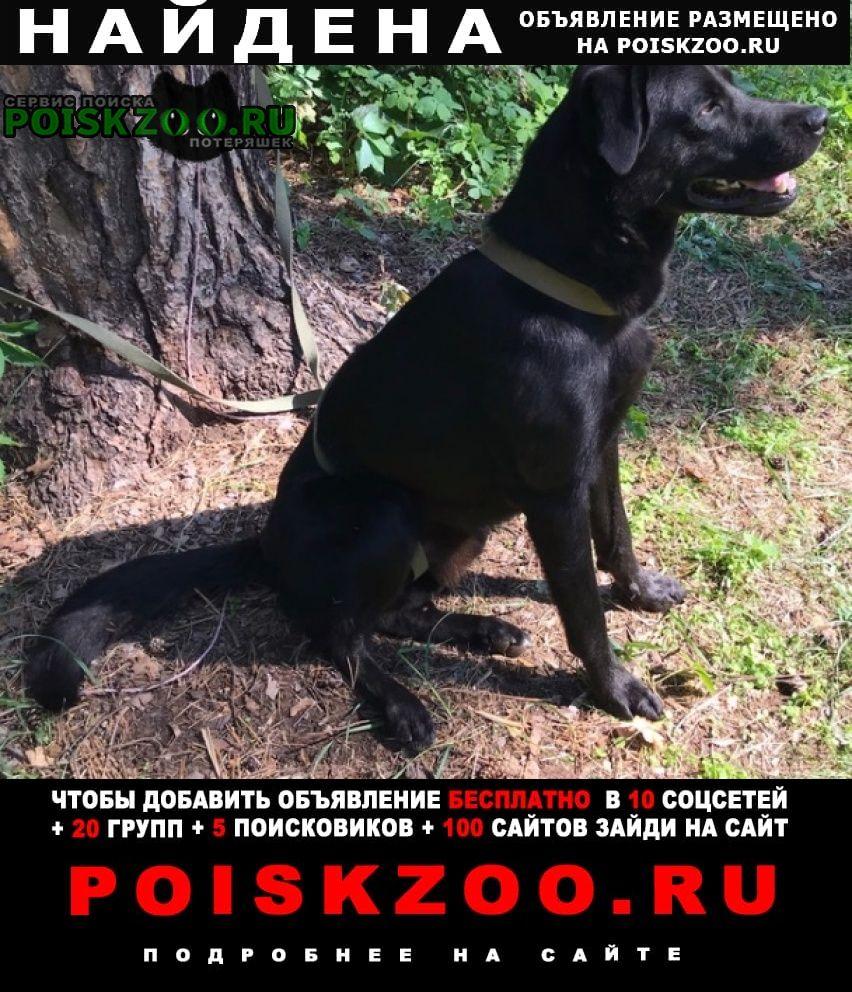 Найдена собака кобель черный крупный Мытищи
