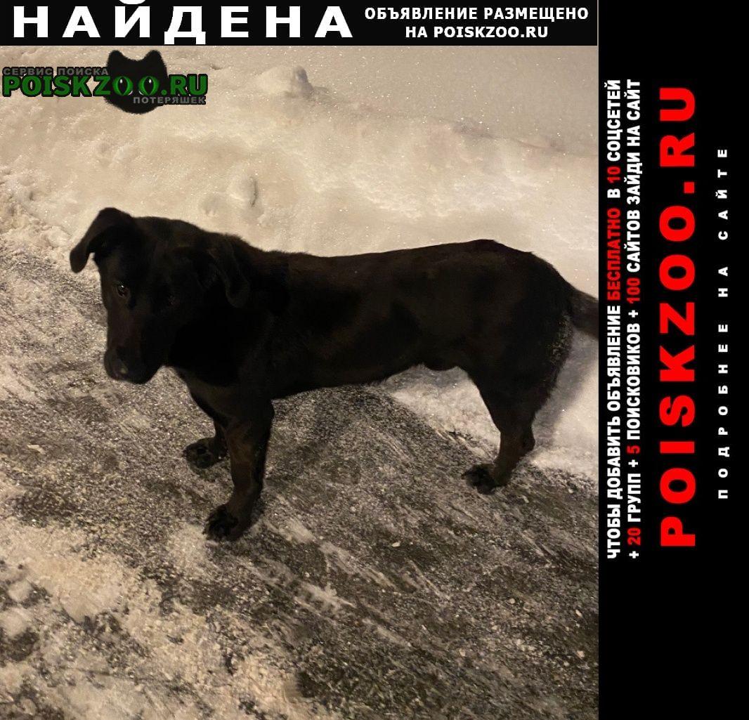 Найдена собака чёрный кобель Люберцы