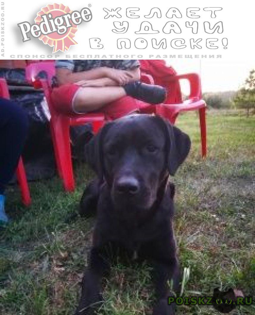 Найдена собака г.Саранск