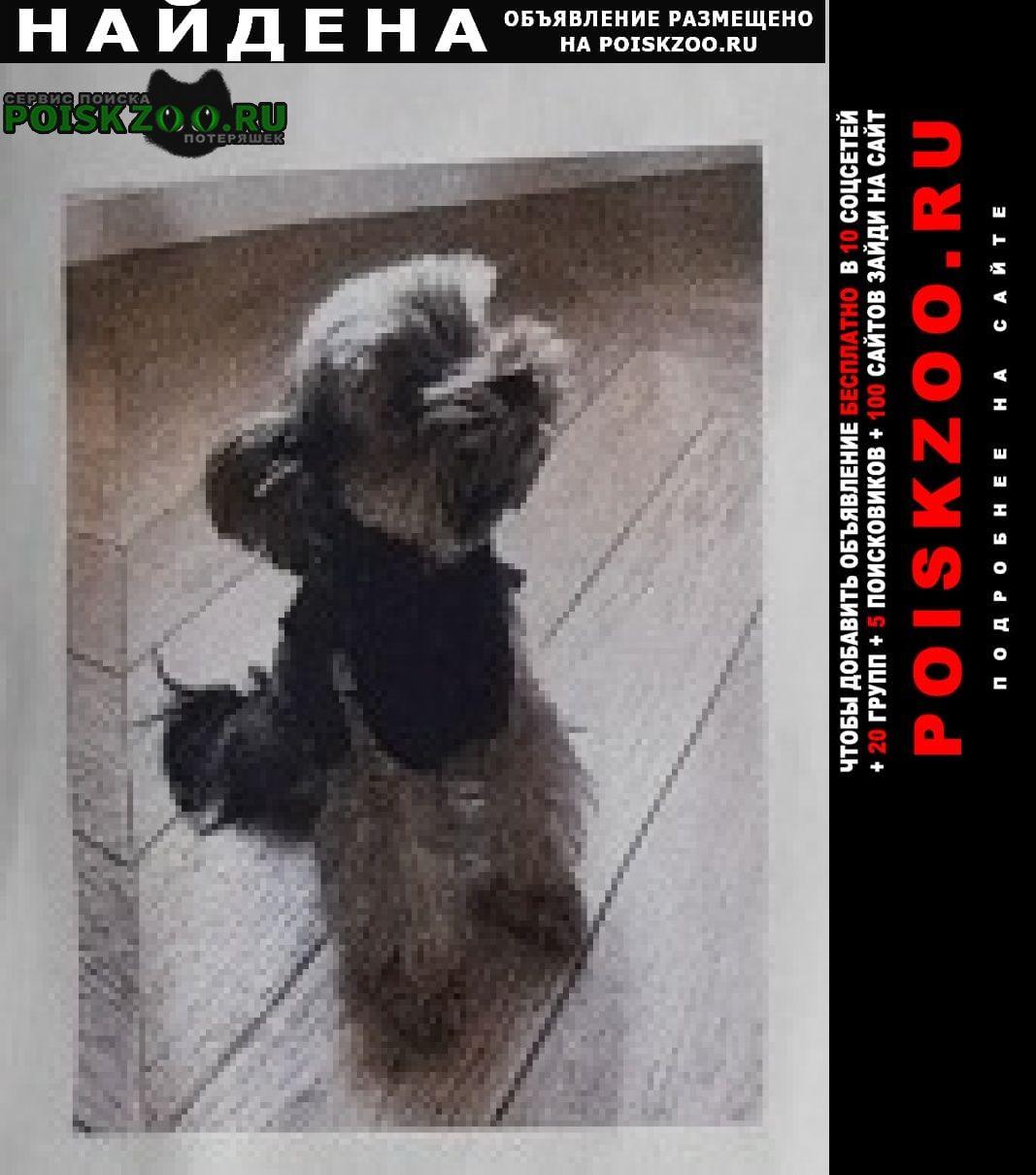 Найдена собака маленькая собачка, возможно чихуахуа Москва
