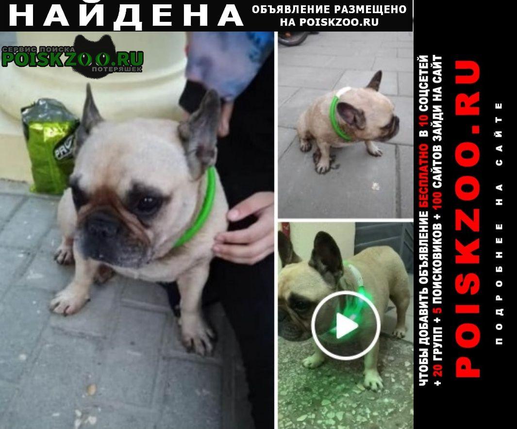 Найдена собака французский бульдог Москва