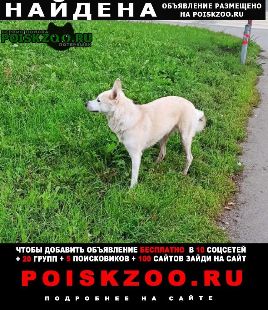 Найдена собака лайка Москва