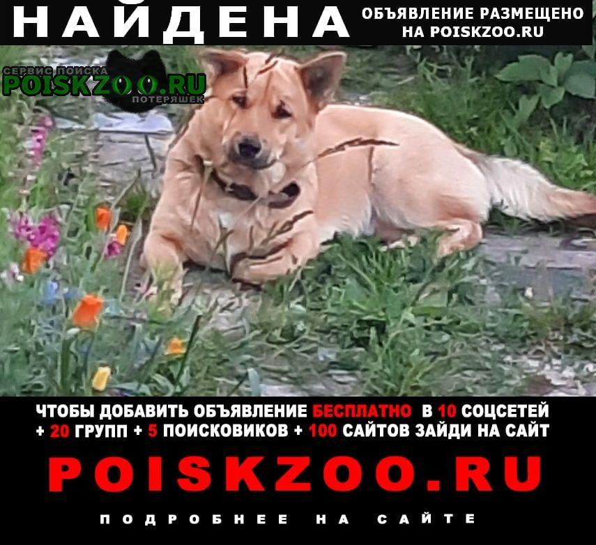 Найдена собака Томск