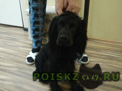Найдена собака кобель г.Мурманск
