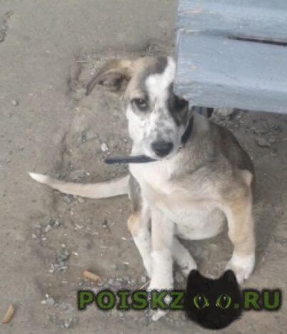 Найдена собака г.Казань