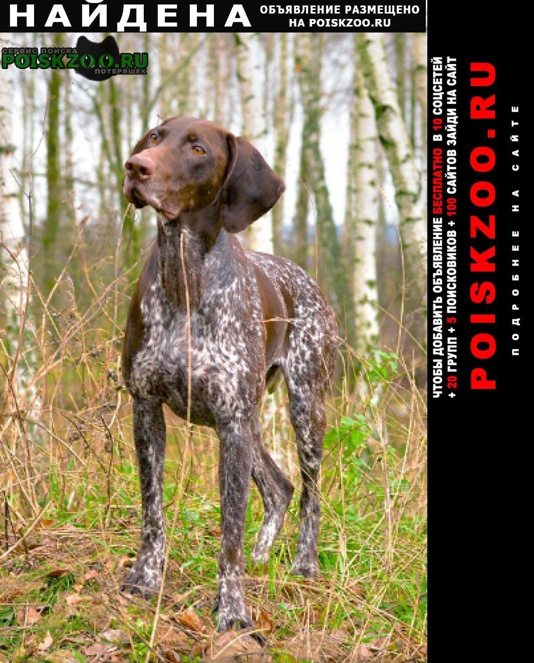 Пропала собака видели как бегал Краснодар