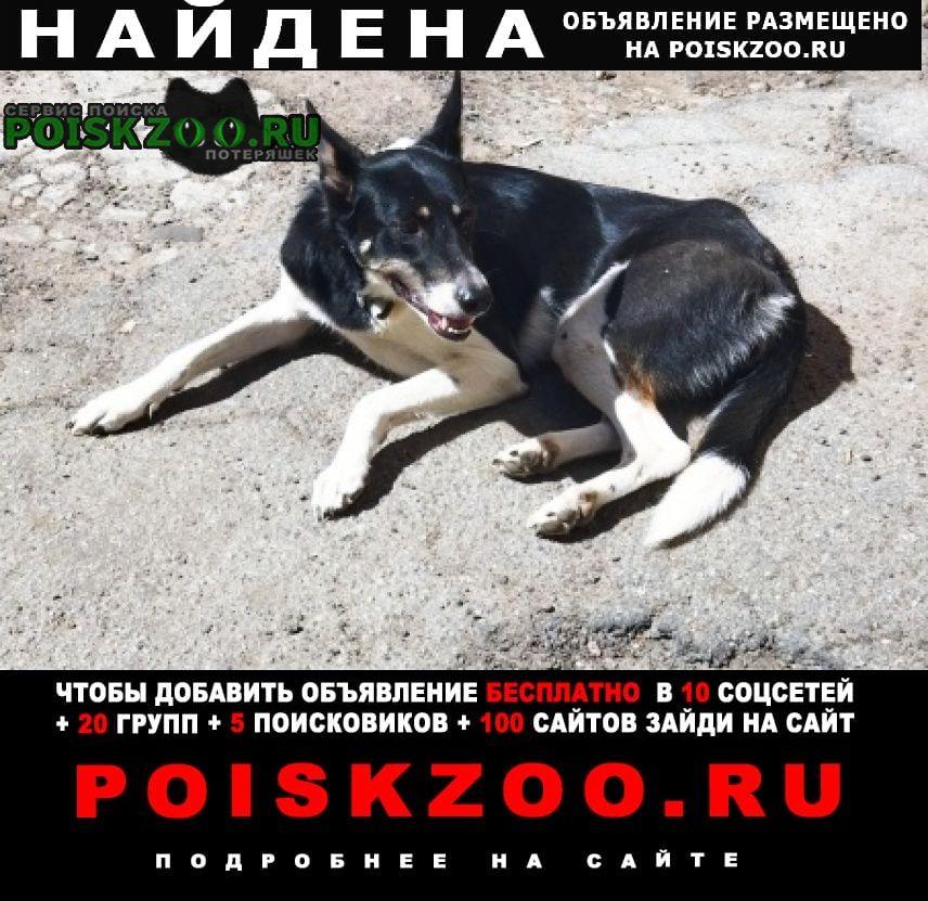 Найдена собака с ощейником Санкт-Петербург