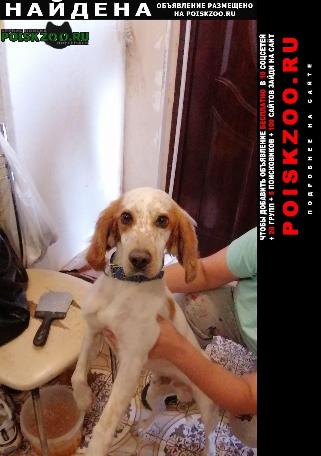 Найдена собака кобель спаниель Тольятти