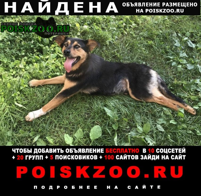 Найдена собака кобель Уфа