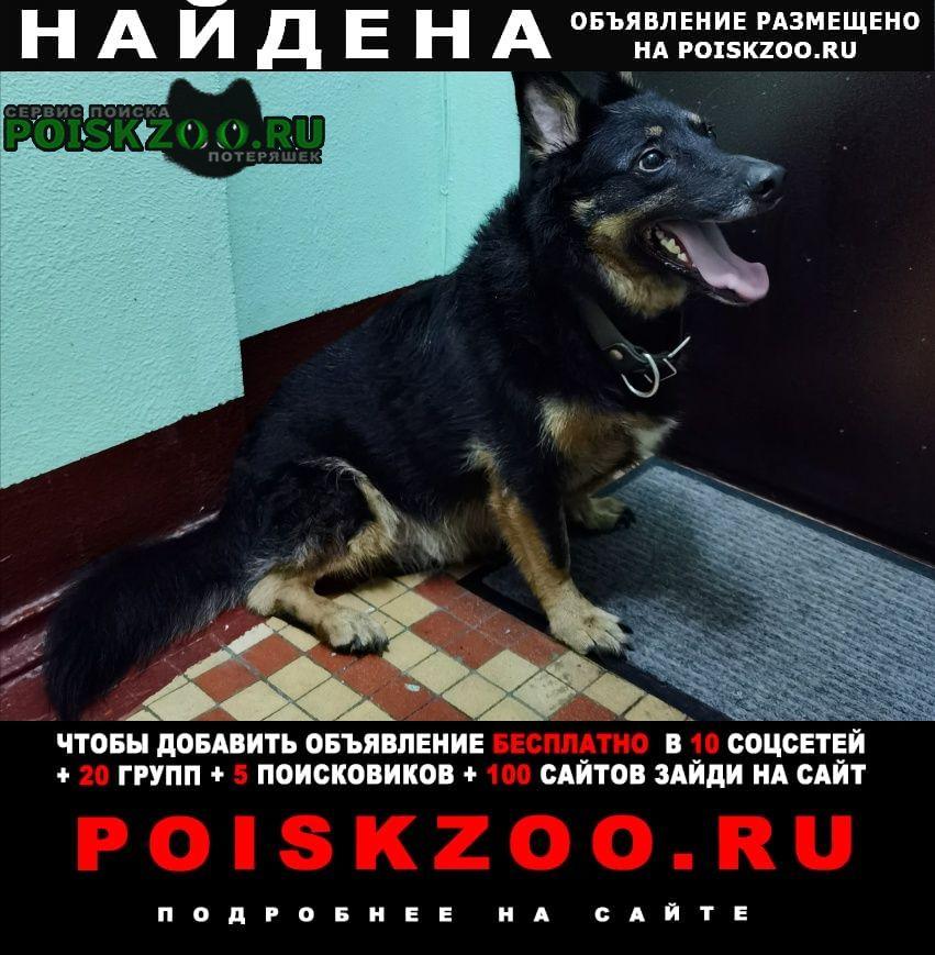 Найдена собака короткие лапки, толстый, чёрный, ниже к. Москва