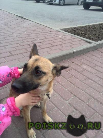 Найдена собака г.Климовск