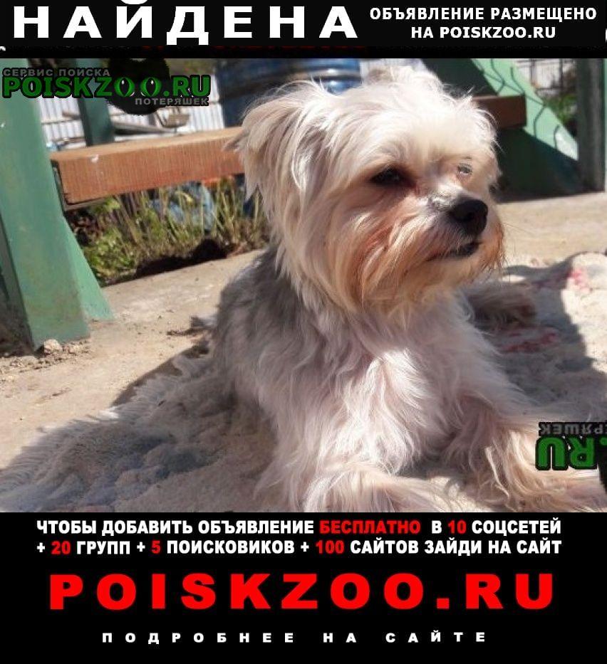 Найдена собака на даче Горный