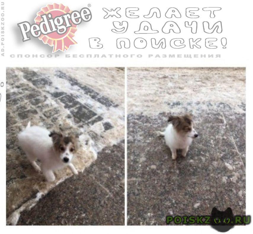 Найдена собака салмышская магазин ринг г.Оренбург