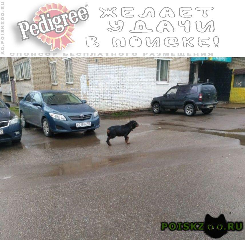 Найдена собака г.Солнечногорск