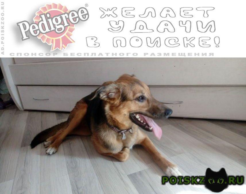 Найдена собака девочка -, годовалая г.Москва