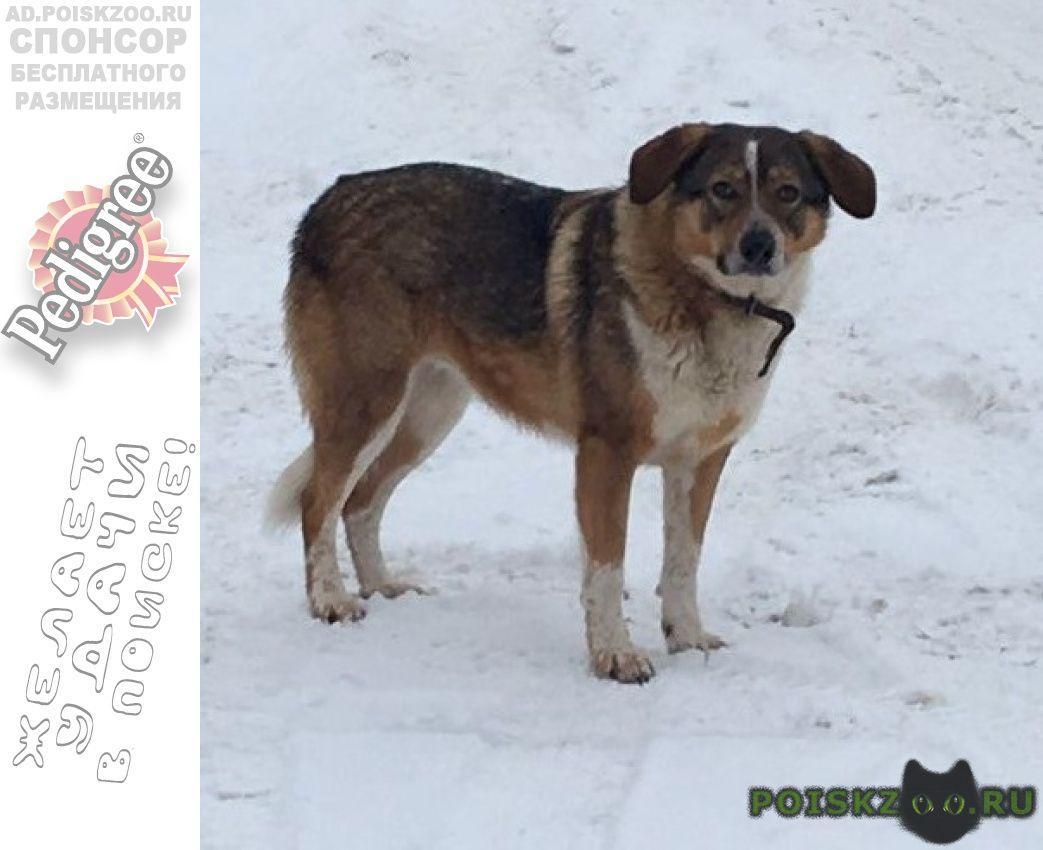 Найдена собака г.Пушкино
