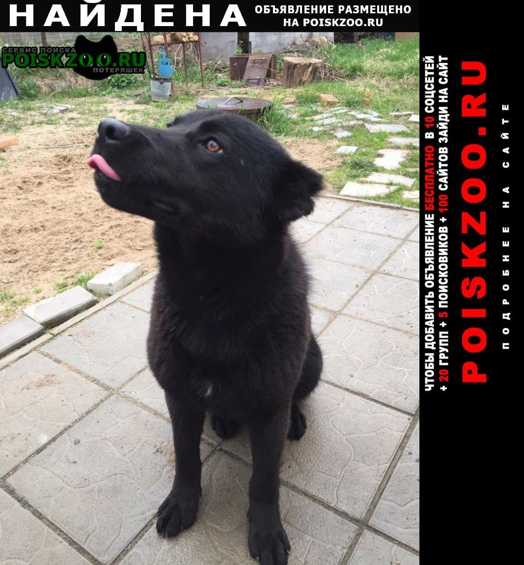 Найдена собака кобель снт росинка. большое саврасово. Видное
