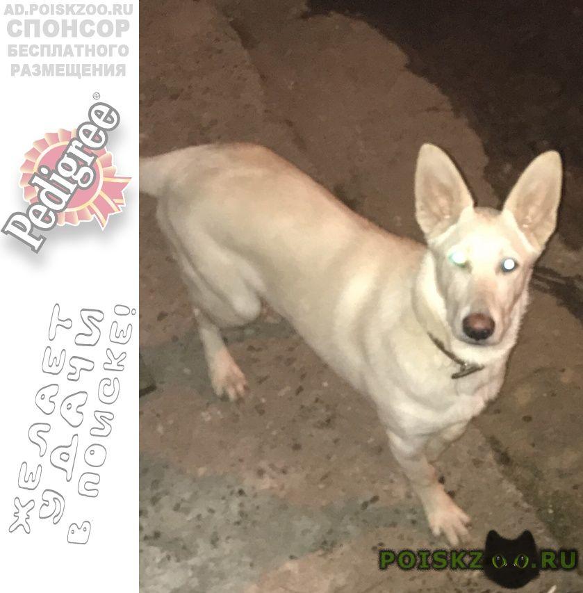 Найдена собака белая, бегает втрой день в юности г.Тверь