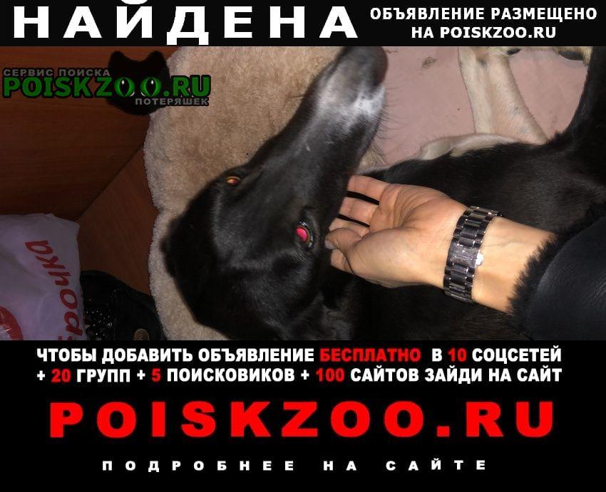 Найдена собака гончая борзая Самара