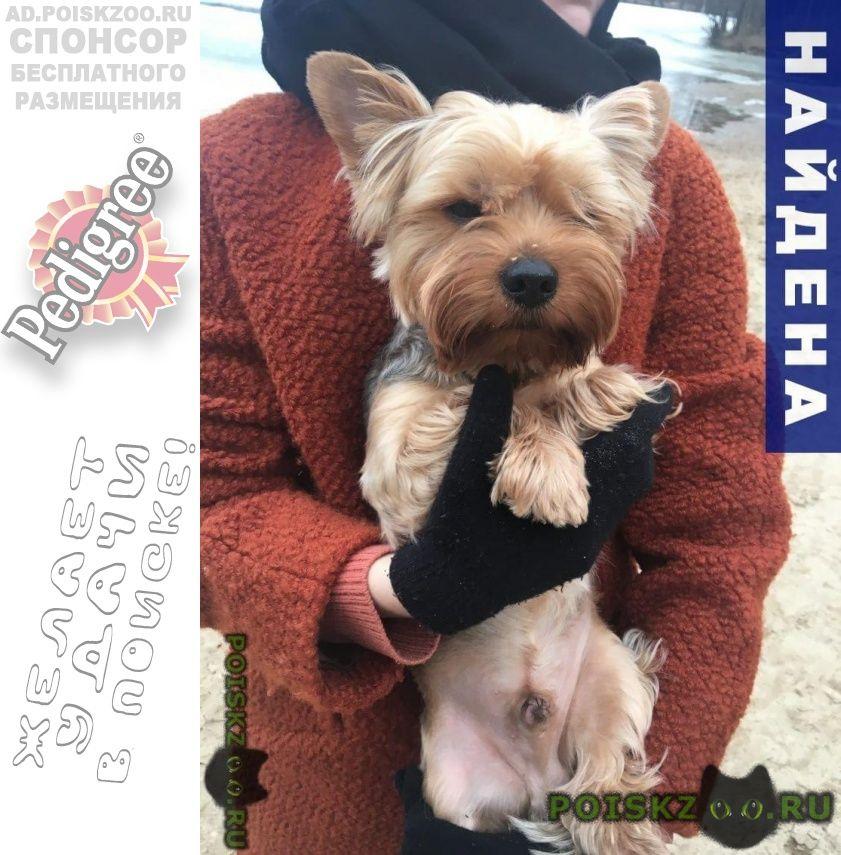 Найдена собака кобель г.Раменское