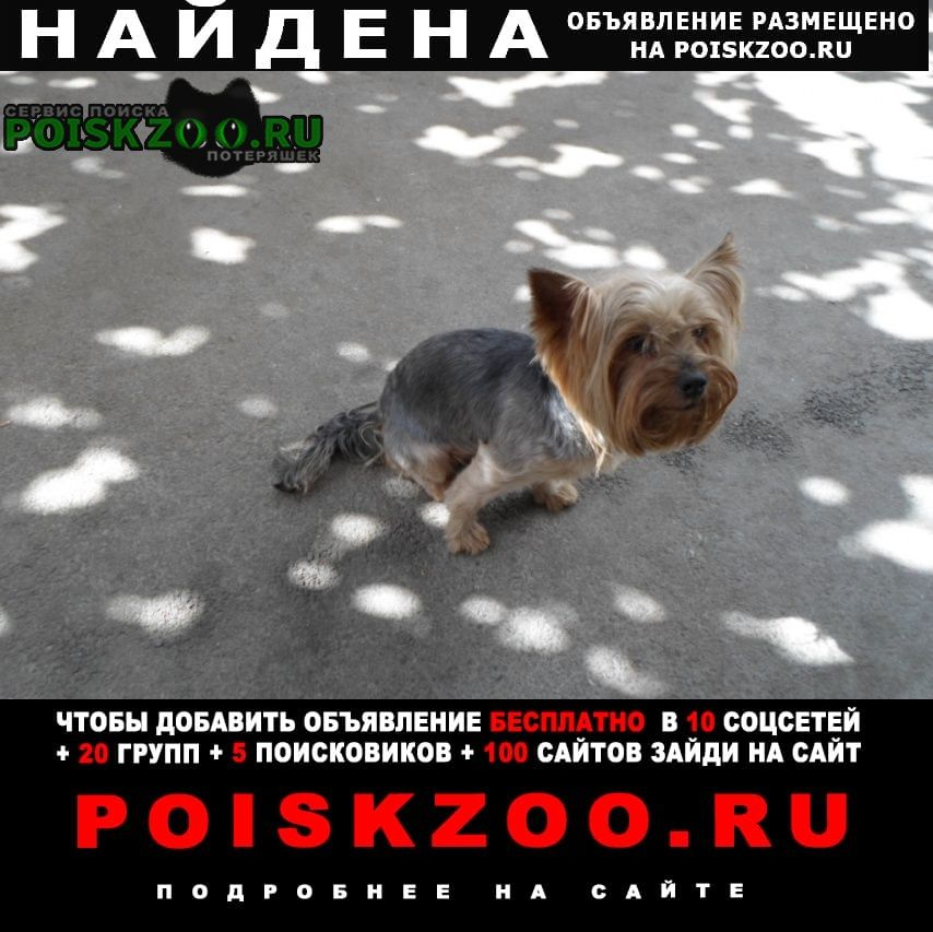 Найдена собака кобель йорк Таганрог