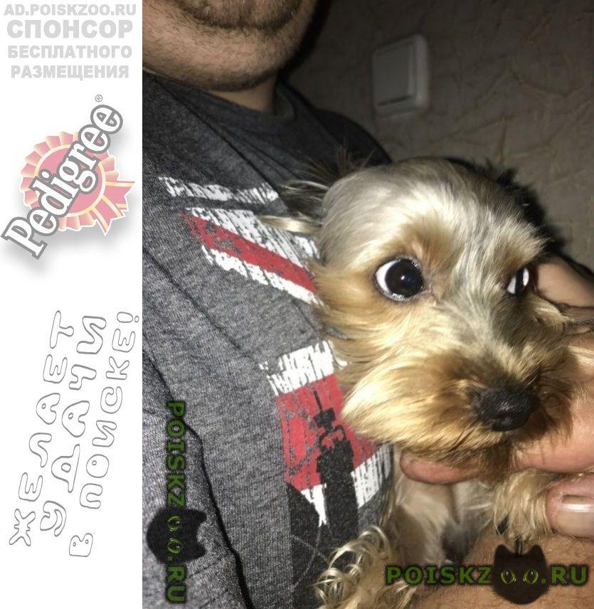 Найдена собака г.Люберцы
