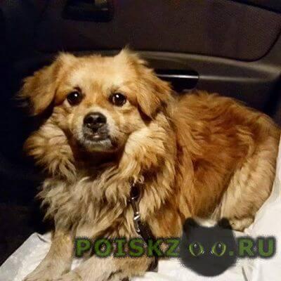 Найдена собака кобель старое косино  г.Москва