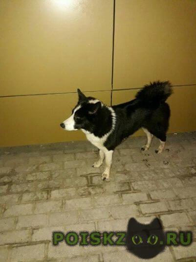 Найдена собака г.Королев