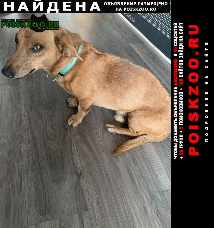 Найдена собака Ангарск