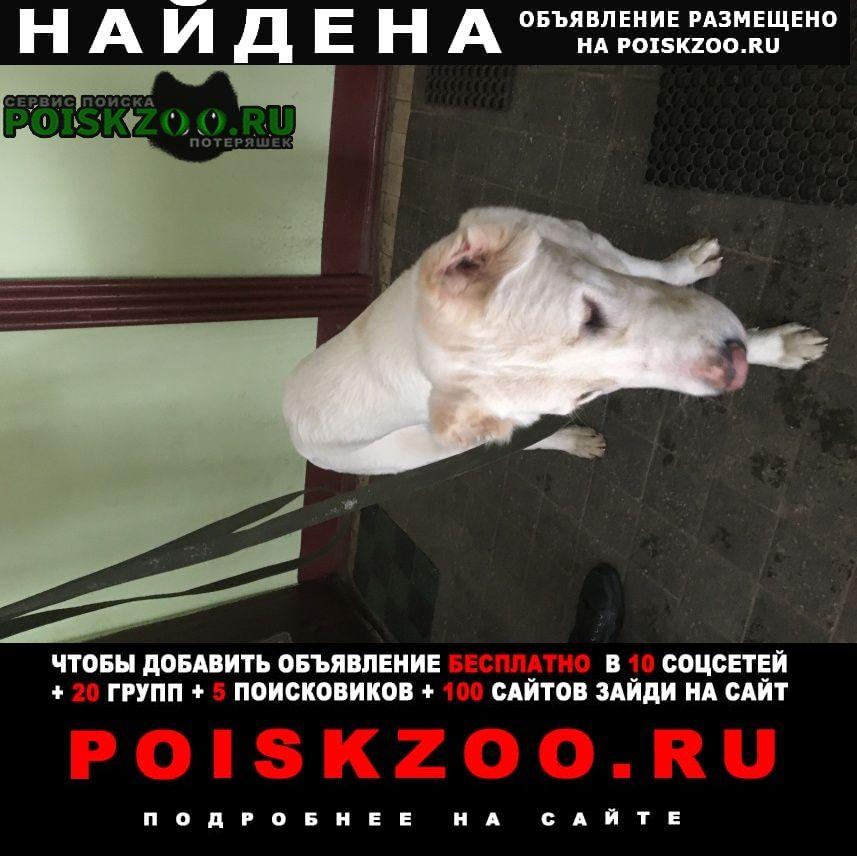 Найдена собака у пролетарского парка Петродворец