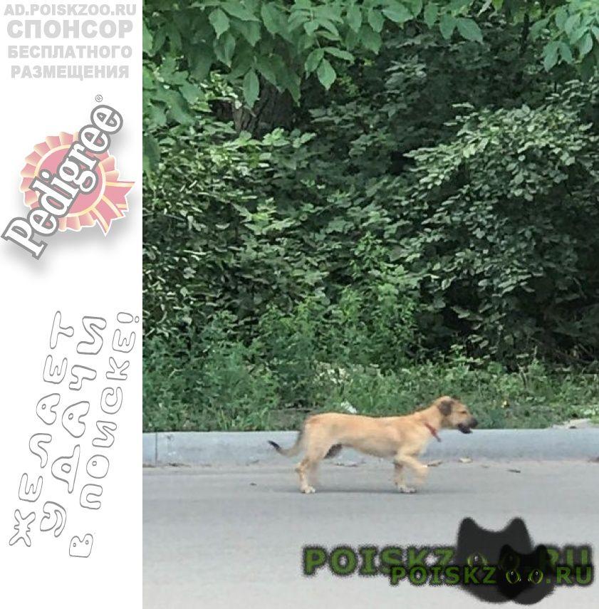Найдена собака потеряшка г.Ростов-на-Дону