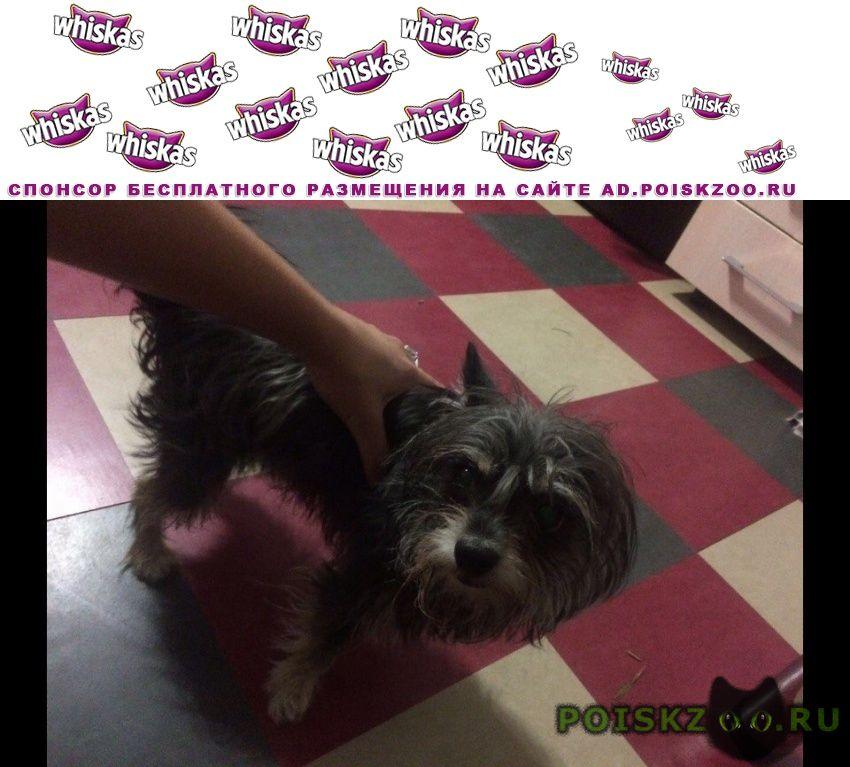 Найдена собака кобель г.Хабаровск